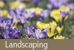 Land Scaping: Grass That's Great for Your Lawn and the Environment...